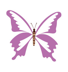 Cute purple butterfly cartoon vector