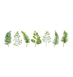 Designer elements set of green forest leaves herb vector
