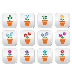 Flower plant in pot colorful icons set vector