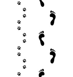 Feet and paws vector