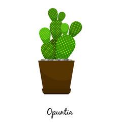 opuntia cactus in pot vector image