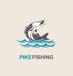 pike fish icon vector image