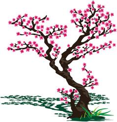 japanese sakura vector image