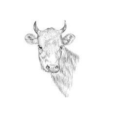 Sketch head of a cow hand drawn vector