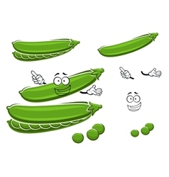 Cartoon pods of sweet green pea vector