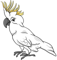 Cockatoo parrot cartoon vector
