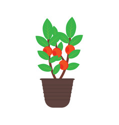 Fruit tree in a pot vector