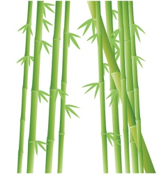 Bamboo tree background vector image