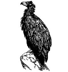 Bird cinereous vulture vector