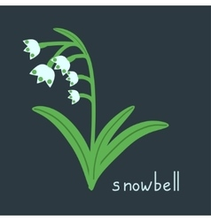 Snowbell plant vector image vector image