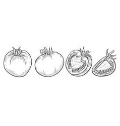 tomato slice set vector image vector image