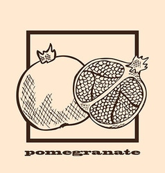Hand drawn pomegranates vector