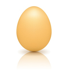 Brown Egg with Reflection vector image