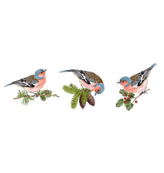 Finch birds set vector