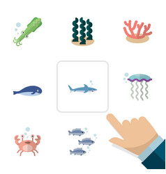 Flat icon marine set of octopus medusa algae and vector