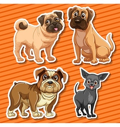 Small breeds dogs on orange background vector