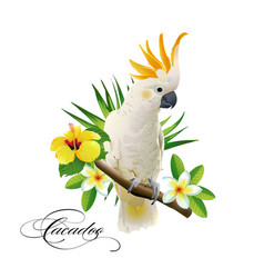 Parrot cockatoo on the tropical branches vector