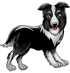 Collie vector