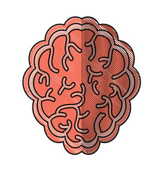 Brain organ icon vector
