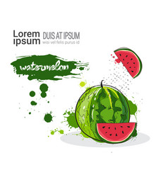 Watermelon hand drawn watercolor fruit on white vector