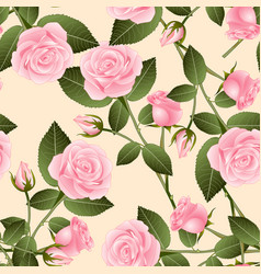 Beautiful pink rose - rosa on beige ivory vector
