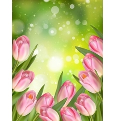 Pink colored tulips eps 10 vector