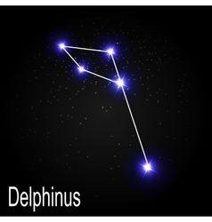Delphinus constellation with beautiful bright vector