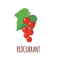 Redcurrant icon in flat style on white background vector