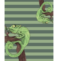 Chameleon card vector image vector image