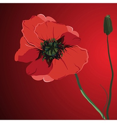 red flower poppy memorial vector image