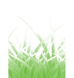 grass blades vector image