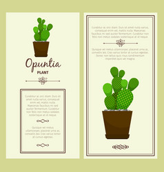 Greeting card with opuntia plant vector