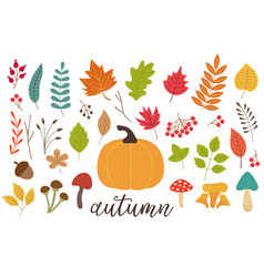 set of isolated autumn plants vector image