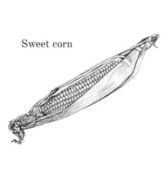 Sweet corn ink sketch vector