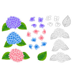 Blue purple pink hydrangea outline vector