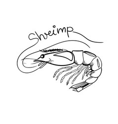 hand drawn shrimp with lettering isolated vector image vector image