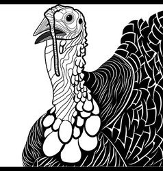 Turkey bird head as thanksgiving symbol vector image