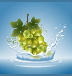 Grape in water splash vector