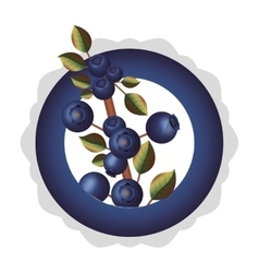 Dish with blueberries branch thick stalk vector