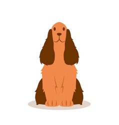 Fluffy spaniel quietly sits on a white background vector