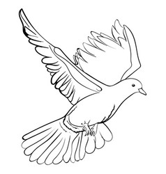 Free flying white dove sketch vector