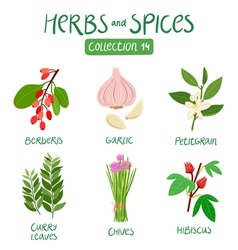 Herbs and spices collection 14 vector
