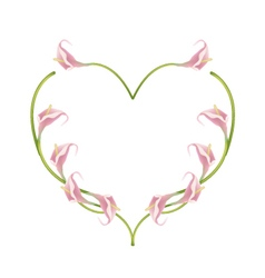 Beautiful pink anthurium flowers in heart shape vector