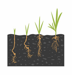 Growth sprouts from seeds vector