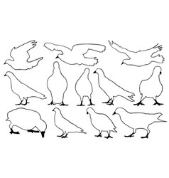 Set of different pigeons vector