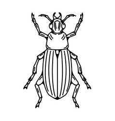 Beetle isolated on white background vector