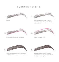 Eyebrow tutorial vector