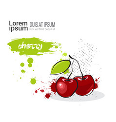 Cherry hand drawn watercolor fruit on white vector