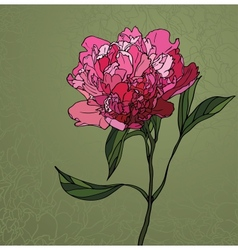peony stained glass window vector image