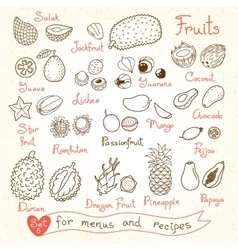 Set drawings of fruit for design menus recipes vector image